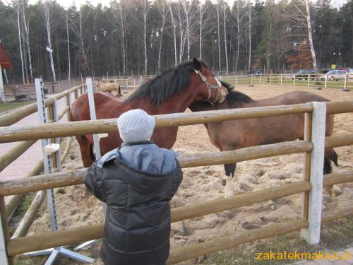 konie0